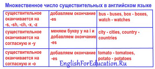 Множественное число существительных в английском языке: образование, общие правила