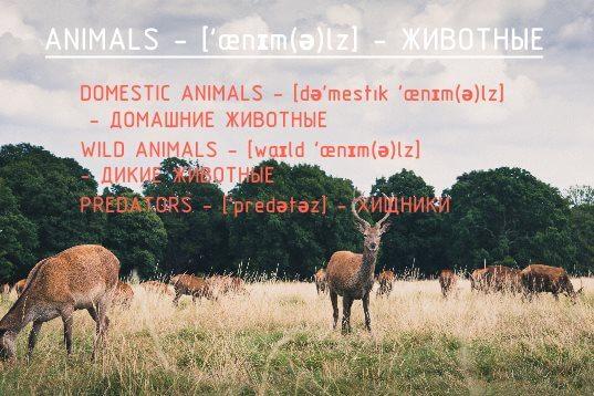 Транскрипции и перевод названий животных на английском языке